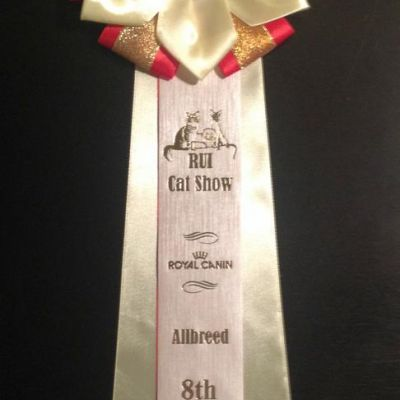 Allbreed 8th Best Cat (Херсон)