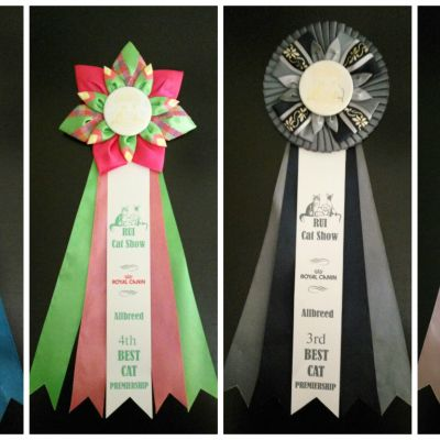 Best (RUI Cat Show 09.2016)